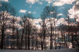 hilltop birches