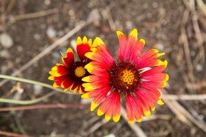 Goblin Flower